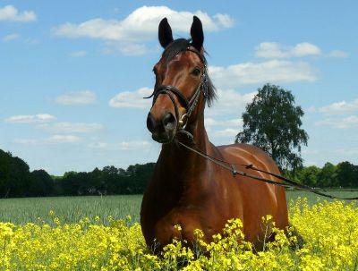 Ein Tag mit einem Pferd